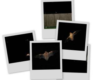2005.05.22-12.42.13/collage3.jpg