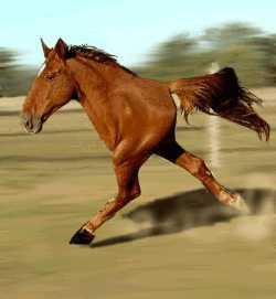 2006.02.07-20.04.36/quarter-horse.jpg